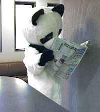 direct_2008_12_10_panda1.jpg